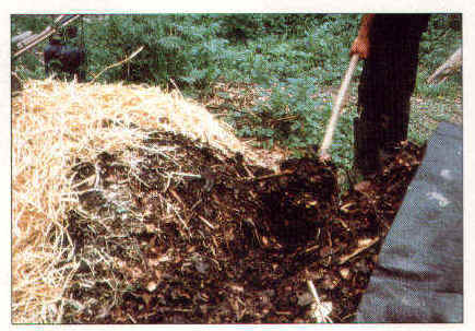 compost-5a