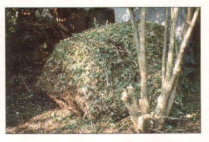 compost-7a