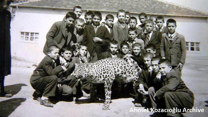 Denizli killed leopard