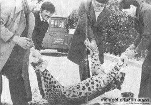 Anatolian panther